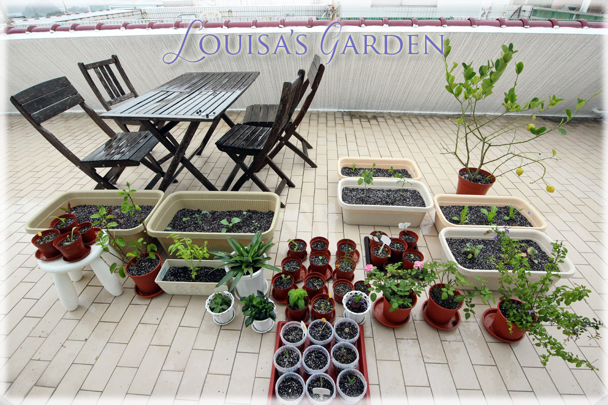 Louisa's-Garden_Dec-9,-2015